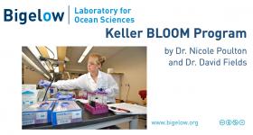 Keller BLOOM 2017